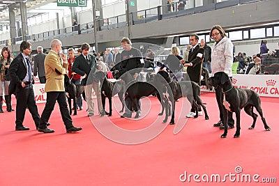 International dog show Editorial Photo