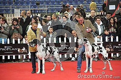 International dog show Editorial Image