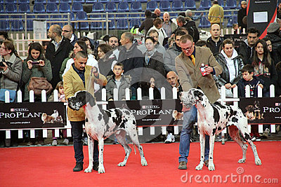 International dog show Editorial Photography