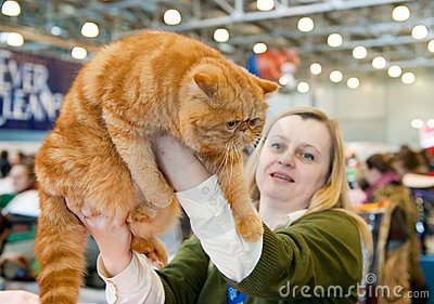 International exhibition of cats Editorial Stock Photo