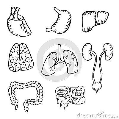 body organs coloring pages | Organ Coloring Pages - Kidsuki