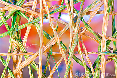 Intertwined Weave Of Raffia