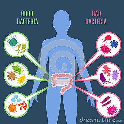 Free Intestinal Flora Gut Health Vector Concept With Bacteria And Probiotics Icons Royalty Free Stock Images - 94658019