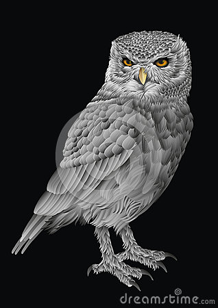 Intrigued silver owl