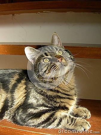 Intriguing kitten