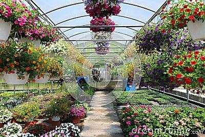 Petición de vivienda. Invernadero-con-las-flores-14391344