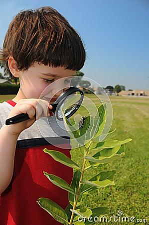 Free Investigating Nature Closeup Stock Image - 6542941