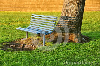 Inviting bench under an old tree
