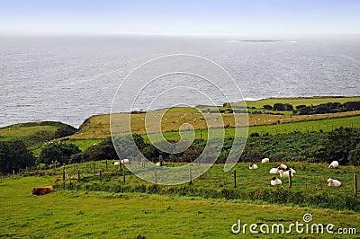 Ireland, the green island.