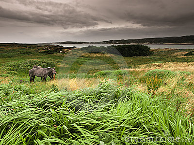 Ireland: horses and grass