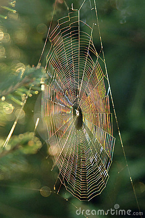 Iridescent Spiderweb