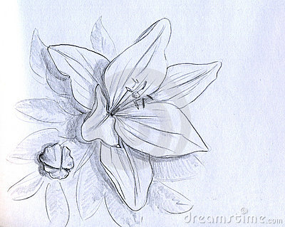 Iris flower - pencil sketch Stock Photo