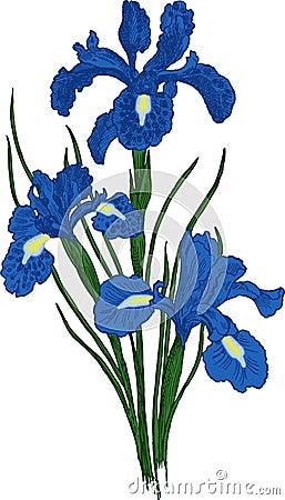 Iris flower. Vector