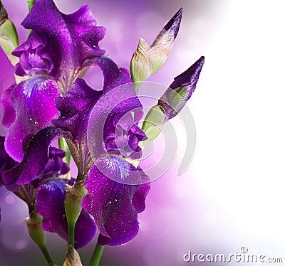 Free Iris Flowers Art Design Royalty Free Stock Photos - 31149428