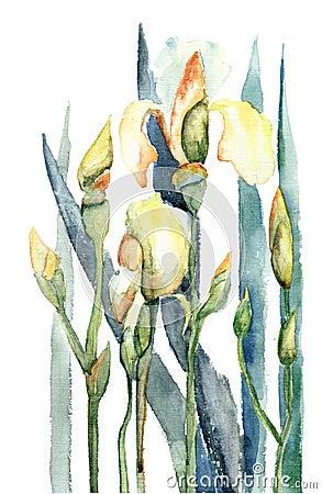 Iris flowers, watercolor illustration