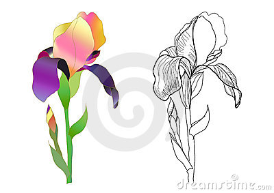 Iris monochrome and colorful
