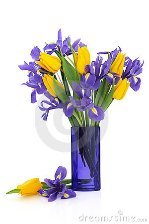 Iris and Tulip Flowers