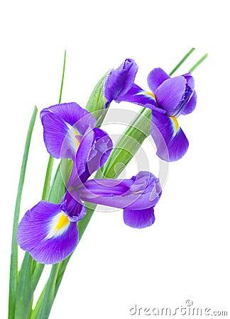 Irise flowers posy