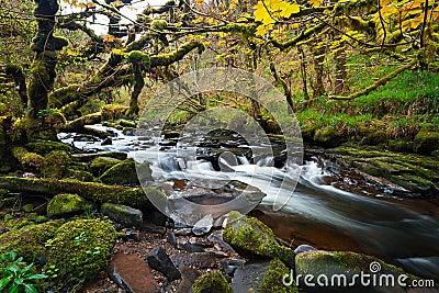Irish creek of Clare Glens
