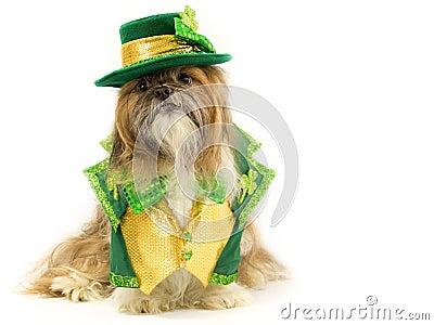 Irish Doggy