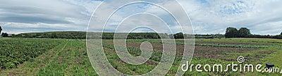An Irish field in early spring