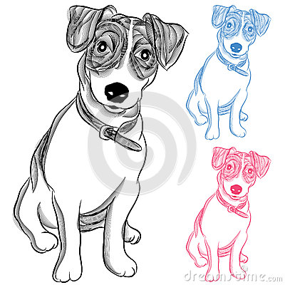 Irish Jack Russell Terrier Dog