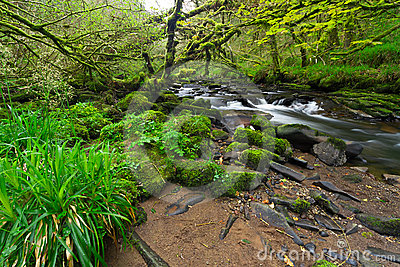 Irish nature scenery with creek