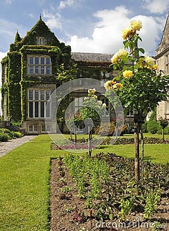 Free Irish Rose Garden Royalty Free Stock Image - 14865216
