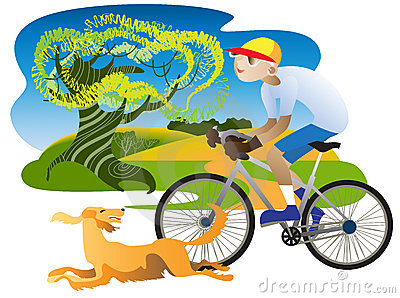 Irish Setter and cyclist