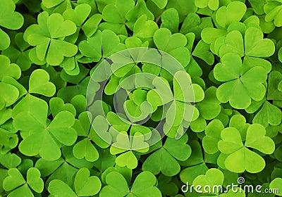 Irish shamrock clover background