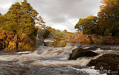 Irish Stream in Killarney National Park