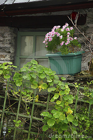 Irish window box