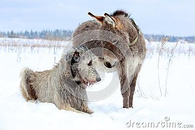 Dog and donkey