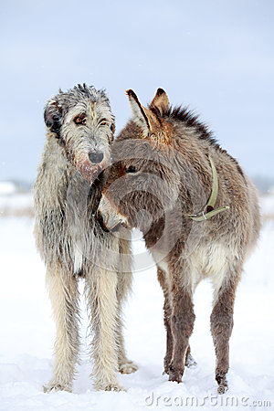 Dog and donkey
