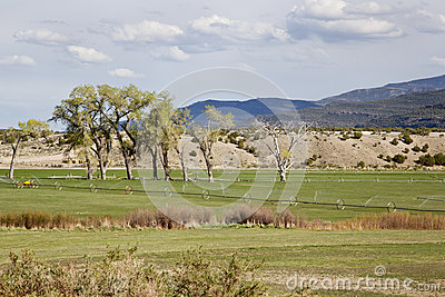 Irrigated meadow in mountain valley