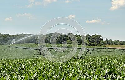 Irrigating a Corn Crop