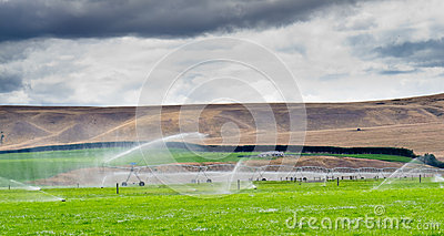 Irrigating lush farm pastures in central Otago NZ