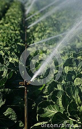 Free Irrigation Stock Photo - 1221940