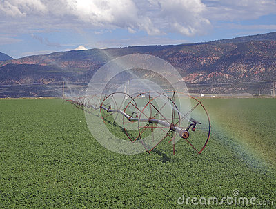 Irrigation and Alfalfa