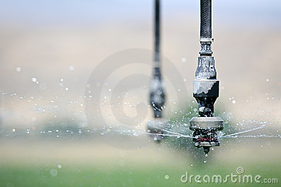 Irrigation close up