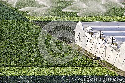 Irrigation, sprinkler