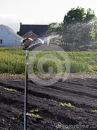 Irrigation at the vegetable farm