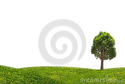 Irvingia malayana tree on green meadow isolated on white background