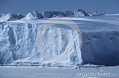 Isberg för hylla för Antarktis Weddell havsRiiser Larsen is med kejsarepingvin