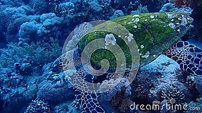 Isla de Tiran del Mar Rojo de Egipto almacen de metraje de vídeo