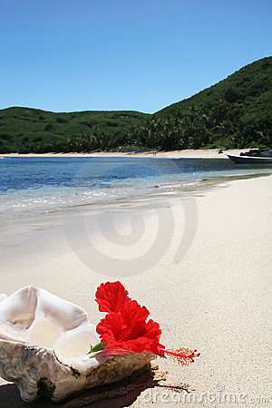 Island beach with shell