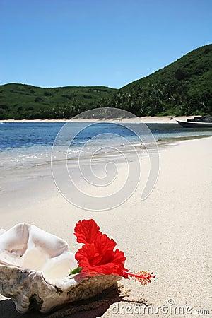 Island beach with shell