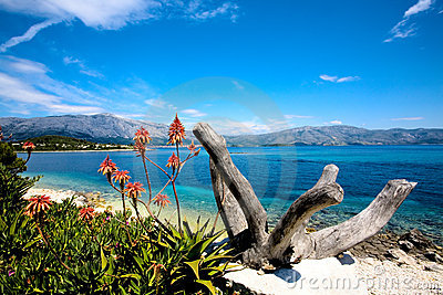 Island beauty 2