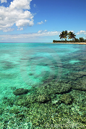 Island and Coral Reef