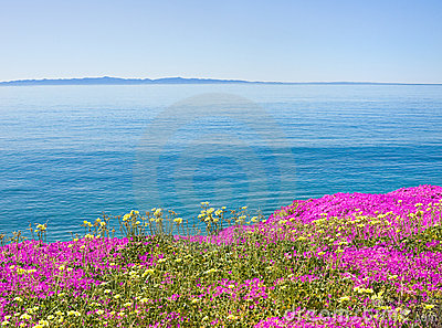 Island and Flowers